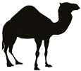 Perl Einführung: Grundlagen für Entwickler Logo